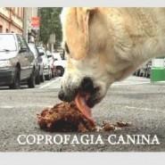 La coprofagia en los perros