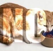 Lo que nunca debe comer un gato