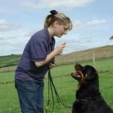 Como educar a un perro adulto