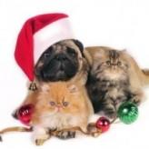 La navidad y las mascotas