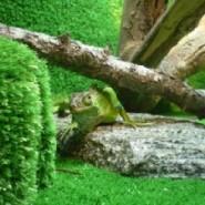 El terrario para nuestra Iguana