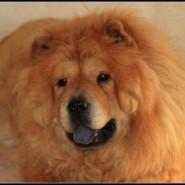 Conozca a las bellas mascotas de Martín Cruz, Akira y Abu
