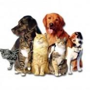 Comunicado de mascotass.com