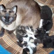 Las primeras semanas de un gatico