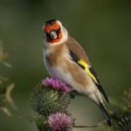 Las aves silvestres y su belleza