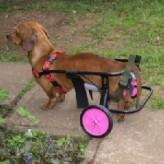 Carro ortopédico para perros
