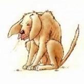 El resfriado y catarro en los perros