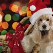 Son las mascotas un buen regalo de navidad ?