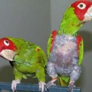 Sufren las aves de depresión