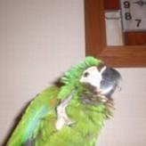 Este es Pakito, la mascota de Miguel Angel y Monica Bermudez