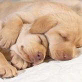 El sueño en nuestras mascotas