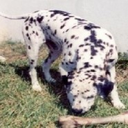 Los perros y sus problemas de conducta