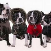 Que cuidados se deben tener con las mascotas en invierno