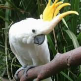 La inteligencia de las aves