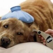 Insuficiencia renal en perros y gatos