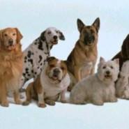 La salud de los perros