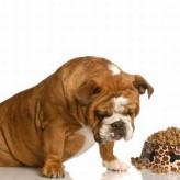 La anemia en nuestras mascotas