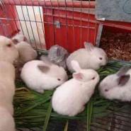 Los conejos y el control de la natalidad