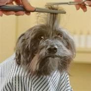 Spas caninos