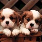 Los perros pequeños sufren mas de estrés