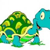 Como cuidar las tortugas en casa
