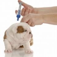 Calendario de vacunas para mascotas