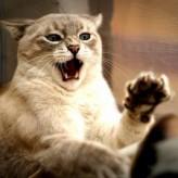 Tratamientos para mascotas muy agresivas