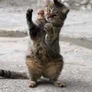 Otras formas de comunicarsen los gatos con sus dueños