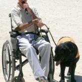 Los perros de asistencia o perros de servicio