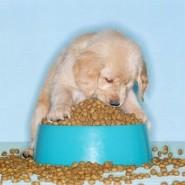 Consejos para perros con estómagos delicados