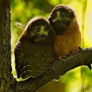 Las más bellas y espectaculares fotos de aves