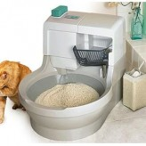 El gato y la orina, cuándo limpiar la caja de arena