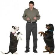 Cual debe ser la jeraquia del perro dentro de la familia