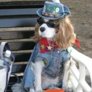 Vestimenta para perros, Recomendaciones