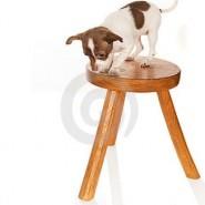 El vértigo en perros, causas y consejos