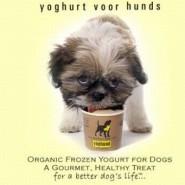 Es saludable darle yogur a los perros