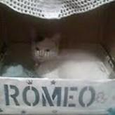 Este es Romeo la mascota de Aruma