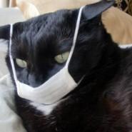 La Gripe Aviar en los gatos