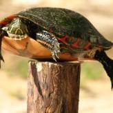 Desparasitación de la tortuga