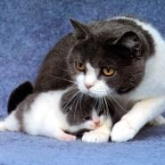 Porque se caracterizan los gatos domèsticos