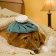 Causas de la orina amarilla en perros