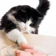 Necesidades especiales de los gatos