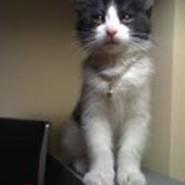 El hermoso gato de Roseane llamado Theo