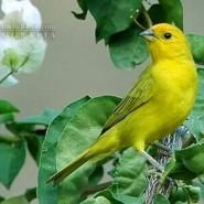 Enfermedades de alto riesgo en canarios