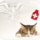 Rinotraqueitis viral felina, transmisión y tratamiento