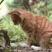 A dónde van los gatos cuando salen