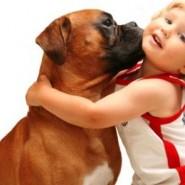Mantenga seguros a los niños alrededor de las mascotas