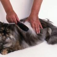 Algunos cuidados que se deben tener con lo gatos