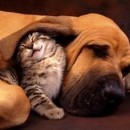 La relación entre perros y gatos, imágenes