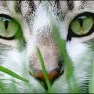 Vitaminas necesarias para gatos